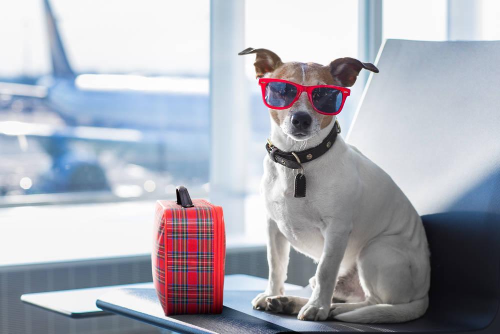 ¿Se puede viajar con mascotas de un país a otro?