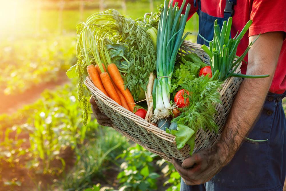 La agricultura ecológica todavía necesita mejorar en nuestro país